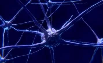 Cortisol het stresshormoon-stressplein